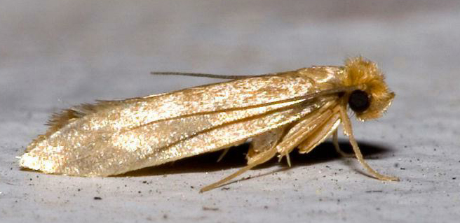 Moth Treatment Oriental Rug Spa