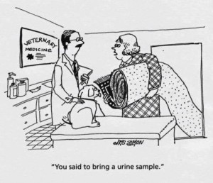 Pet Urine In Rug